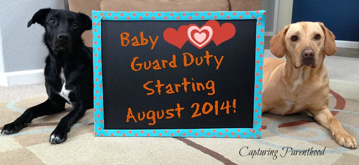 Pregnancy Announcement © Capturing Parenthood