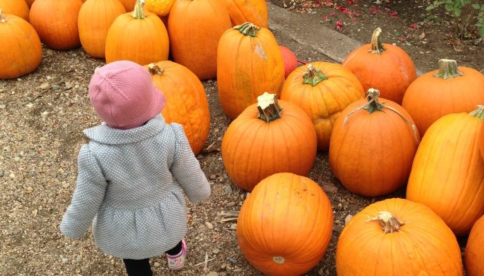 Our Annual Adventure to the Pumpkin Patch