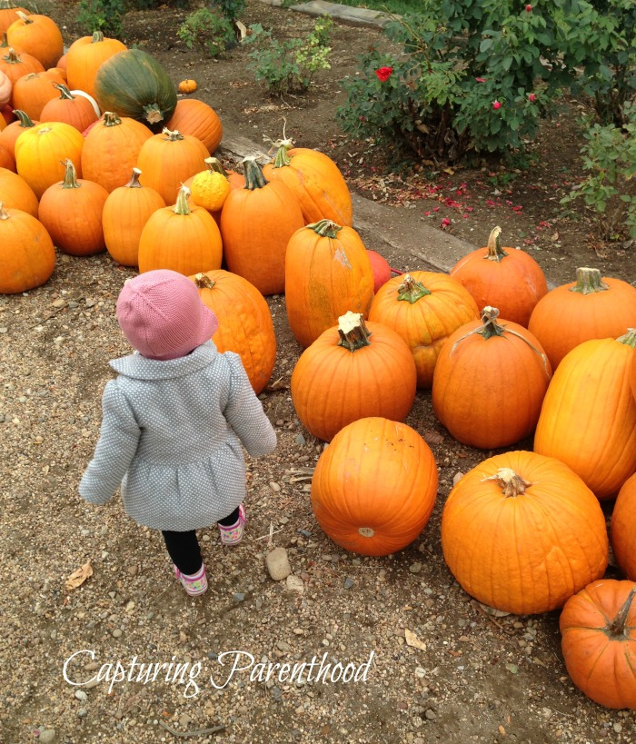 Our Annual Adventure to the Pumpkin Patch © Capturing Parenthood